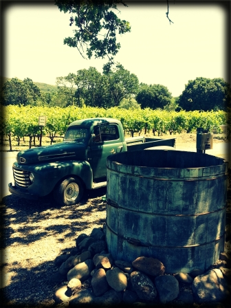 little_vinyard[1]